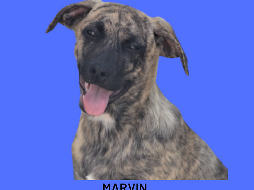 Marvin-sandra