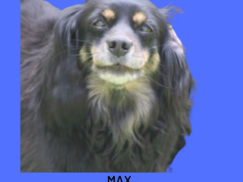 Max-maya
