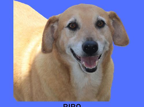 Bibo-jully
