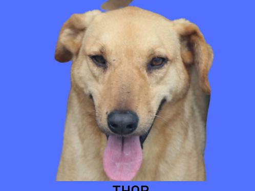 Thor-caucaia