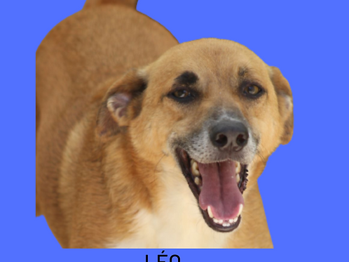 Léo-300 Anjos