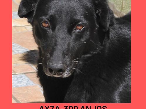 Ayza-300 Anjos
