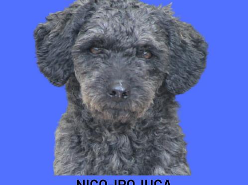 Nico-ipojuca