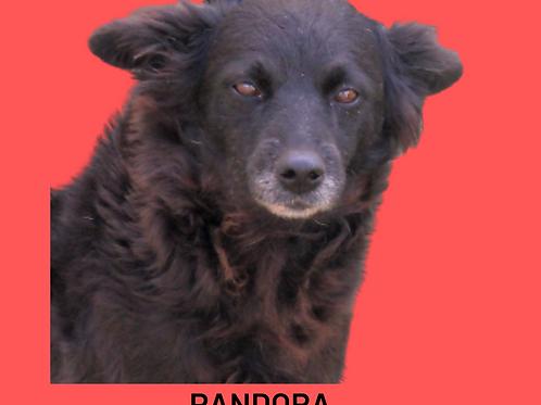 Pandora-caucaia