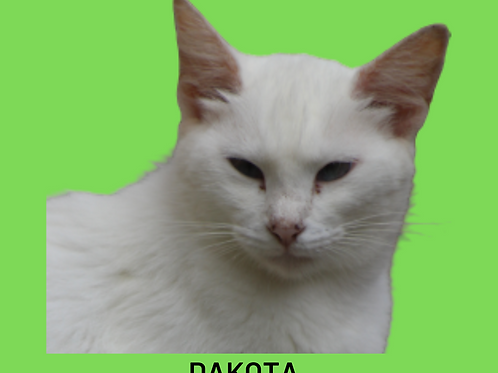 Dakota-gata