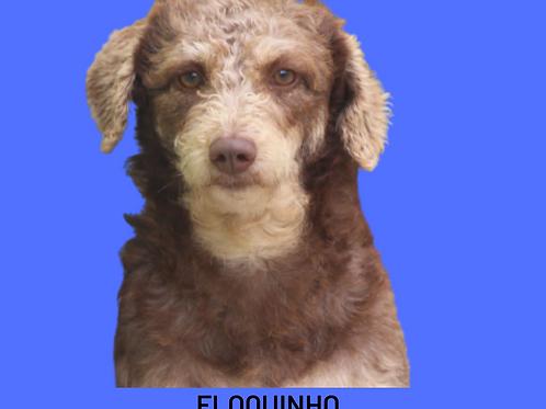 Floquinho-embu