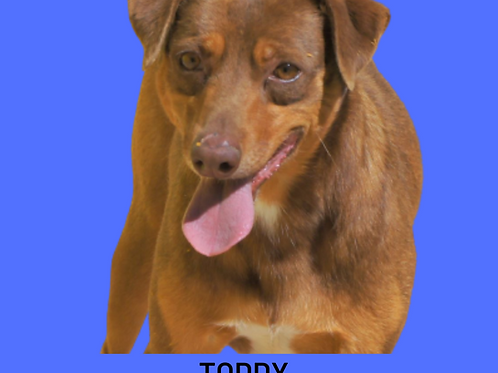 Toddy-dolly