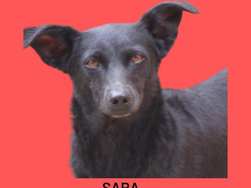 Sara-tutty
