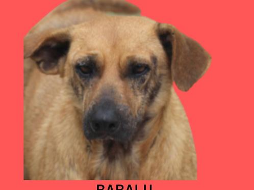 Babalu-embu