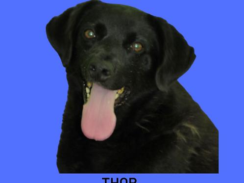 Thor-duka