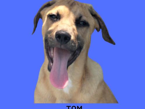 Tom-sandra