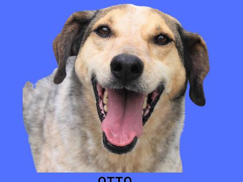 Otto-caucaia
