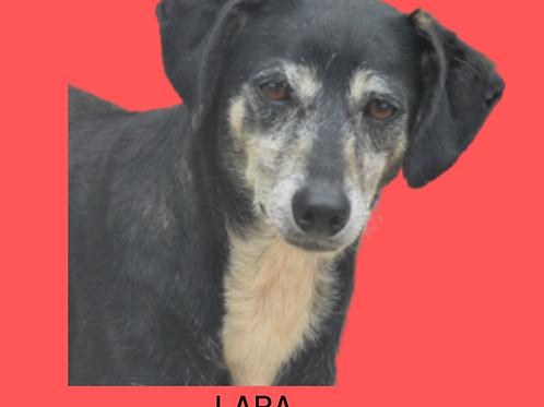 Lara-300 Anjos