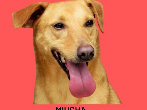 Miucha-caucaia