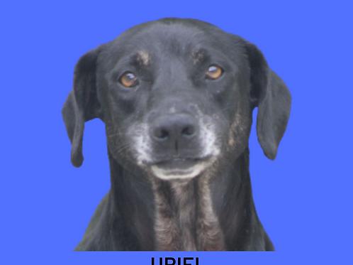 Uriel-Inês