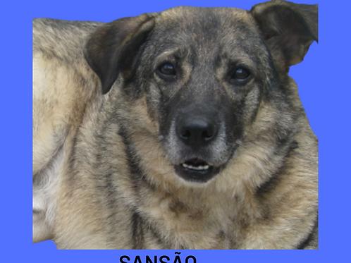 Sansão-300 Anjos