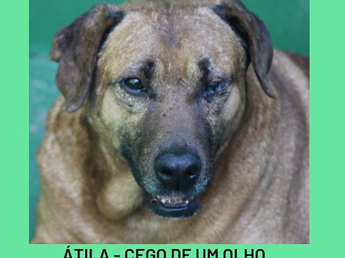 Atila-embu
