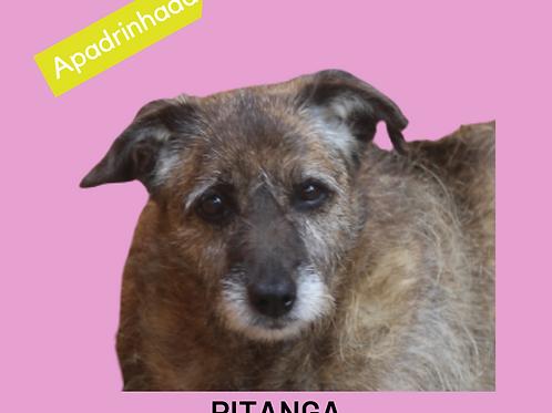 Pitanga-300 Anjos