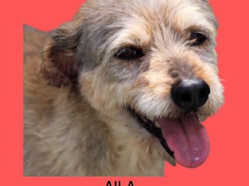 Aila-Sr. Claudio