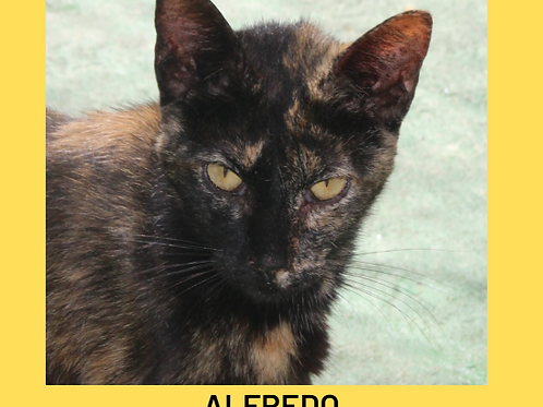 Alfredo-gato