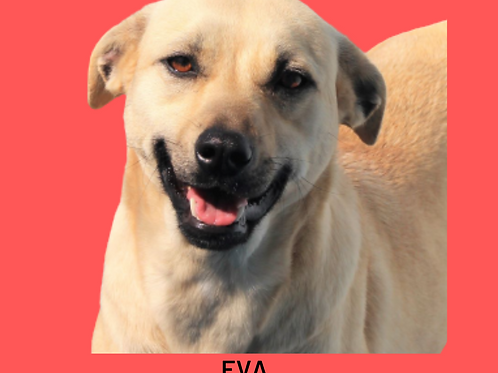Eva Amarula