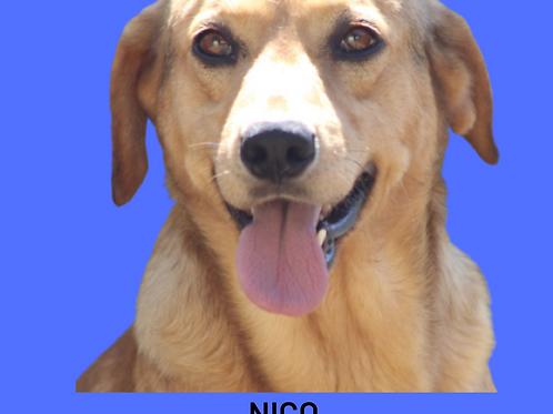 Nico-Sr. Claudio