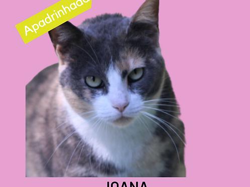 Joana-gata