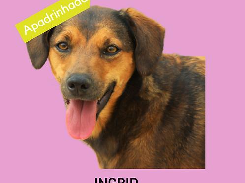 Ingrid-300 Anjos