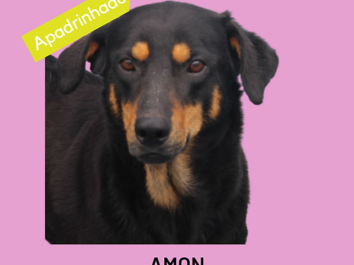 Amon-300 Anjos