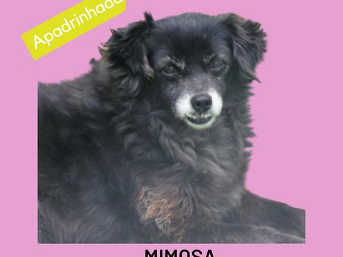 Mimosa-Sr. Claudio