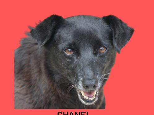 Chanel-Sr. Claudio