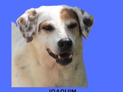 Joaquim-carapicuiba