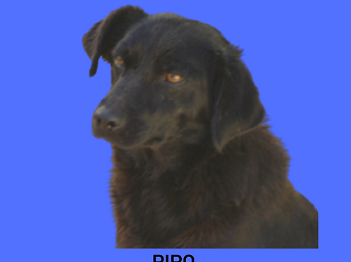Pipo-Dna Beth