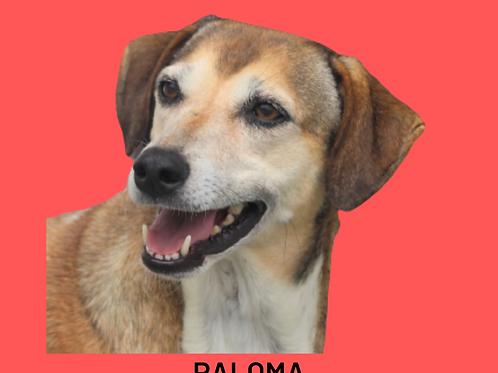 Paloma-Sr. Claudio