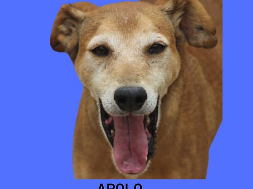 Apolo-parelheiros