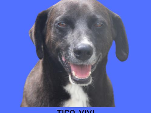 Tico-vivi