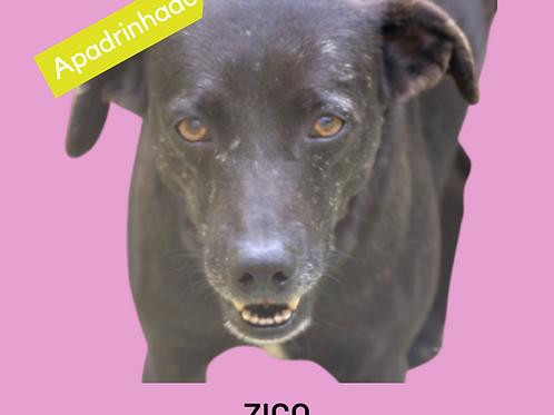 Zico-300 Anjos