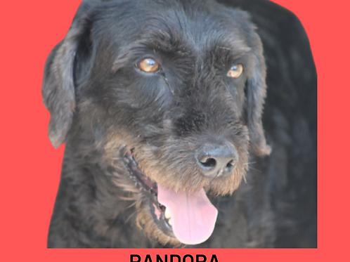 Pandora-naomi