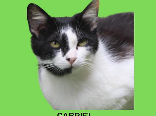 Gabriel-gato