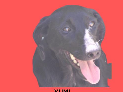 Yumi-Sr. Claudio