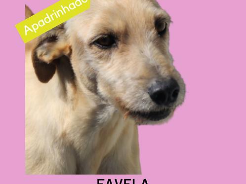 Favela-300 Anjos