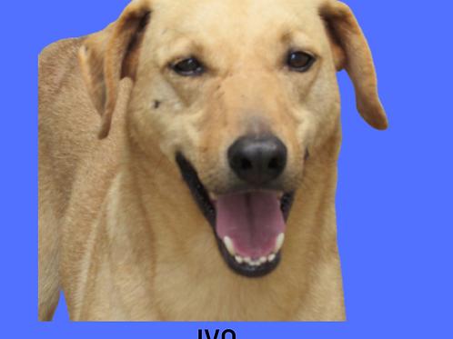 Ivo-caucaia