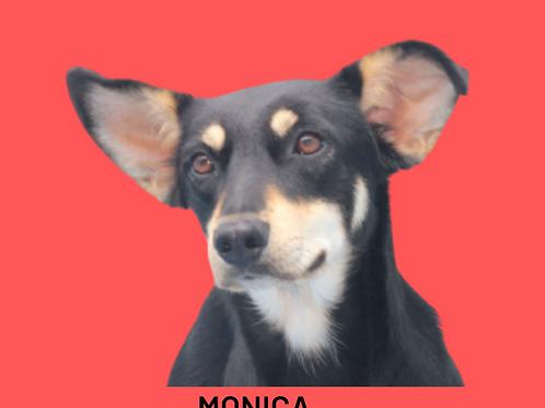 Monica-caucaia
