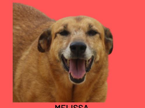 Melissa-vitória