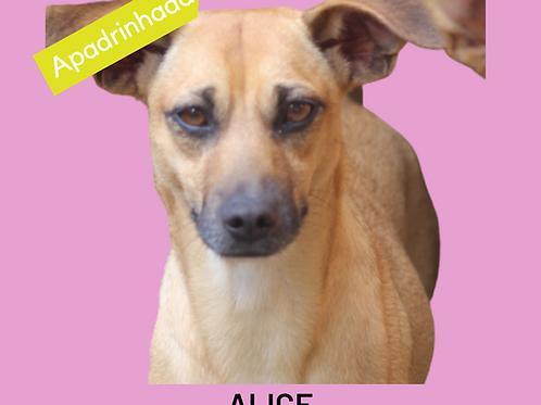 Alice-caucaia