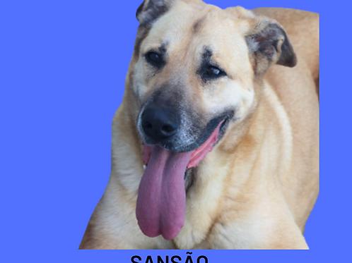 Sansão-Ipojuca