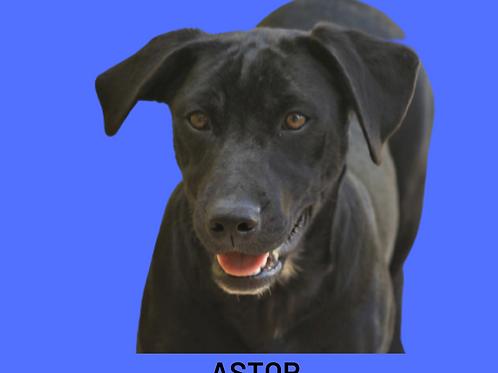 Astor-bombom