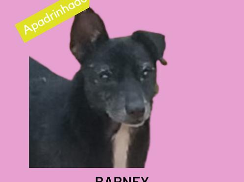 Barney-embu