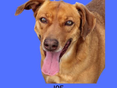 Joe-300 Anjos