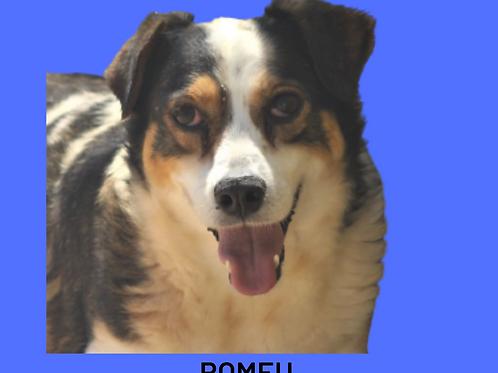 Romeu-embu